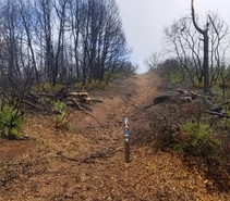 South Cow Mountain OHV Management Area after Mendocino Complex fires. Photo by BLM.