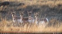 Wildlife on public lands. Photo by Dan Ryan, BLM.
