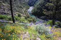 Summer along the North Fork of the American River in California. Photo by Bob Wick, BLM.