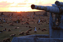historic_artillery_at_midway_atoll_nwr_by_dan_clarkusfws