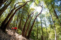 Paradise Royale Trail System. Photo by IMBA.