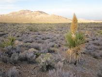 Public lands in in San Bernardino County. Photo by BLM.