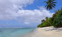 national_park_of_american_samoa_nps_photo_beach_palm_tree_2019