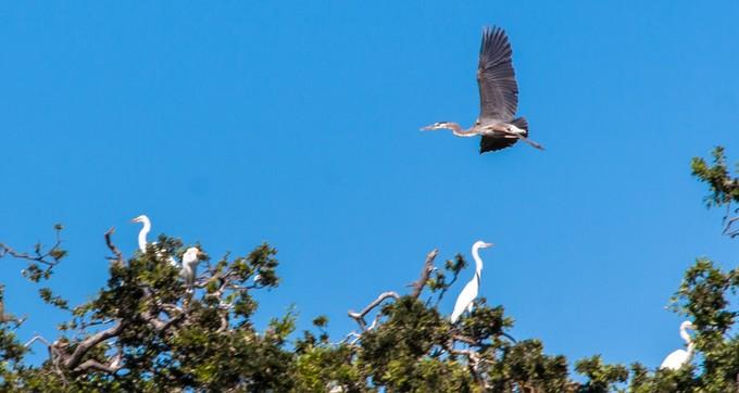 Cosumnes River Preserve. Photo by Jesse Pluim, BLM.