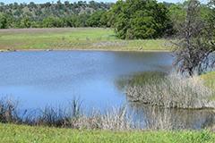 Northern California fishing pond