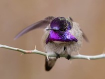 A humming bird on a branch.