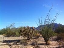 Desert near the Bradshaw Trail. BLM photo.
