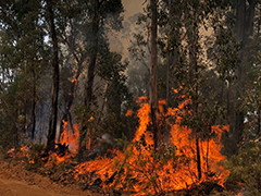 A fire fighter oversees a burning pile of brush.