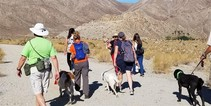 A group of people walking dogs in the desert.