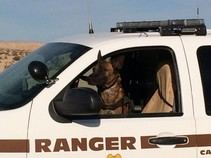 A K-9 dog in BLM truck.