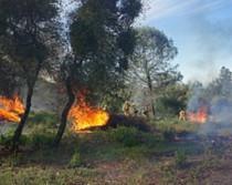 Photo of piles of brush burning.