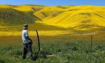 A photo of a man standing by a filed of wildflowers.