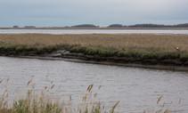 A photo of marsh.