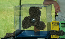 A photo of zebra mussels on a propeller