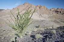 A plant in a desert landscape.