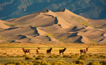 great sand dune and elk