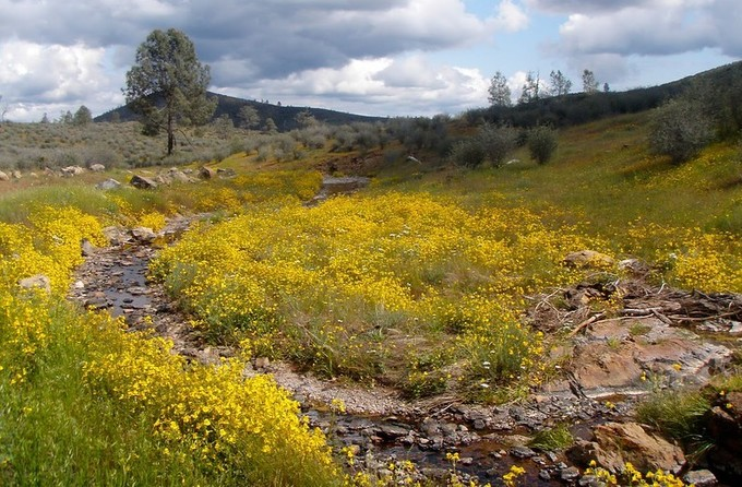 A file of yellow wild flowers and a river.