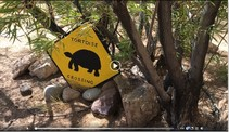 Video still showing turtle crossing sign.