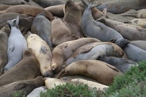 Young elephant seals lying on a beach