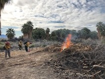 Fire fighters burning brush in an area with palm trees.