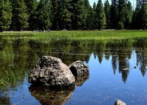 Vernal pools surrounded by green grass and pine trees.