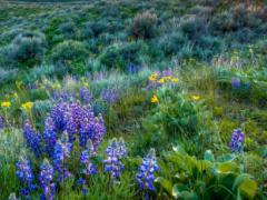 Sagebrush and flowers.