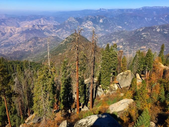 Sequoia in a mountain landscape