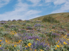 A filed with wildflowers.