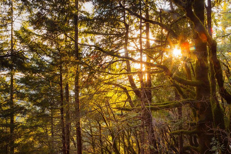 golden sunlight flooding through trees.