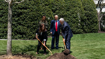 Planting of a tree.