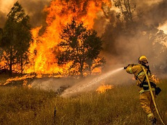 A firefighter spraying a wildfire with water.