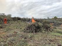 Pile burning.