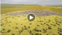 Video still of a field of wildflowers.