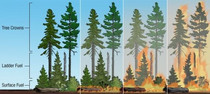 A graphic showing wildfires.