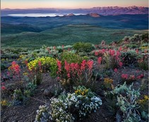 Wildflowers with a lake and mountain range int he background.
