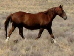 A wild horse.
