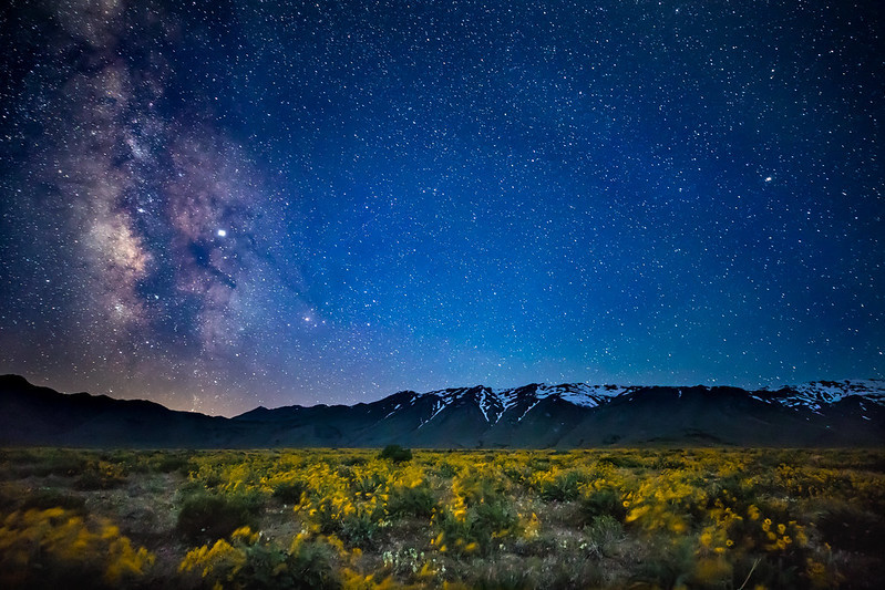 A night view of wildflowers, the milky way and mountains.