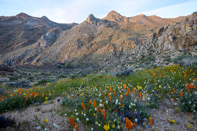 A mountain and wild flowers.