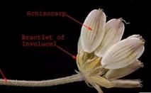 Video Still of a dried flower.