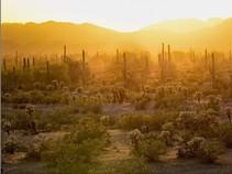 Sun set in the desert with saguaro cactus.