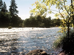 A photo of Pit river.