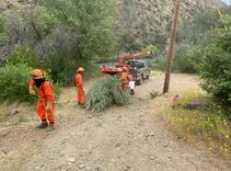 Crew clearing brush and tree branches.