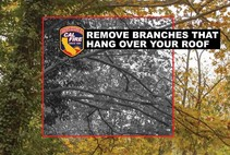An info-graphic that reads: Remove branches that hang over your house.