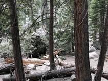 Rocks and trees fallen from rock slide.