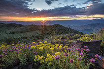 Sun rising over a mountain top with colorful flowers.
