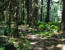 Headwaters Trail through wooded forest.