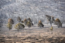 Burned trees and shrubs from the Numbers fire in Nevada.