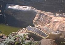 A snake on some rocks.