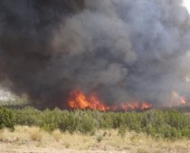 Fire burning in a field and trees.