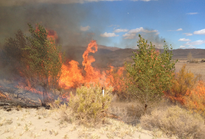 Fire burning in a field of grass and brush.